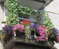 Вертикальное и горизонтальное озеленение балкона