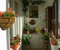 Украшение балкона живыми цветами